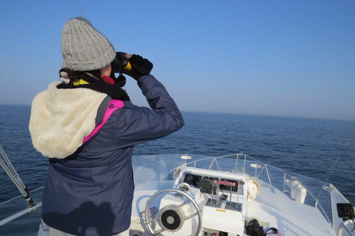 Pirinio Atlantikoetako itsas hegaztiak aztertzen ari da Miarritzeko Centre de la Mer